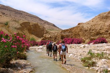 Wandelreis Jordanië: Jerash, kloven, Petra & Wadi Rum | Snow Leopard (24)