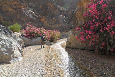 Wandelreis Jordanië: Jerash, kloven, Petra & Wadi Rum | Snow Leopard (31)