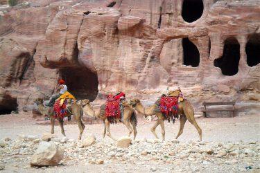Wandelreis Jordanië: Jerash, kloven, Petra & Wadi Rum | Snow Leopard (62)