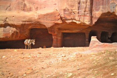 Wandelreis Jordanië: Jerash, kloven, Petra & Wadi Rum | Snow Leopard (73)