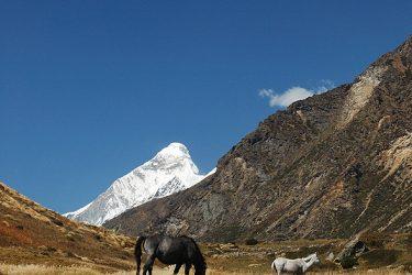 Trektocht India Garhwal Nanda Devi Santuary Basiskamp   Snow Leopard (19)