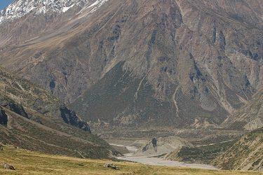Trektocht India Garhwal Nanda Devi Santuary Basiskamp   Snow Leopard (23)