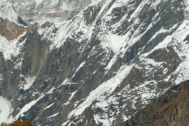 Trektocht India Garhwal Nanda Devi Santuary Basiskamp   Snow Leopard (29)