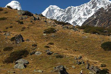 Trektocht India Garhwal Nanda Devi Santuary Basiskamp   Snow Leopard (32)