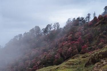 Wandelreis Sherpaland Nepal trektocht authentiek gebied | Snow Leopard 027