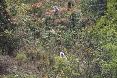 Wandelreis Sherpaland Nepal trektocht authentiek gebied | Snow Leopard 002