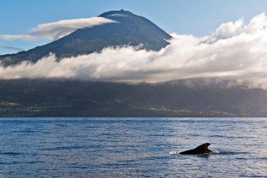 Azoren wandelreis individueel Portugal | Snow Leopard (01)