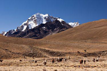Bolivia | Cordillera Real & Salar de Uyuni | Snow Leopard (07)