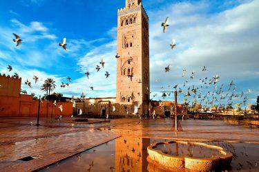 Marrakech Wandelreis Sahara Toubkal Tafraoute Saghro Woestijn Marokko | Snow Leopard (3)