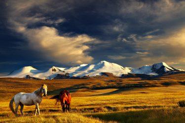 Mongolië wandelreis trektocht Khövsgöl , Khangai Nuruu, Gobi woestijn | HT & Snow Leopard 13