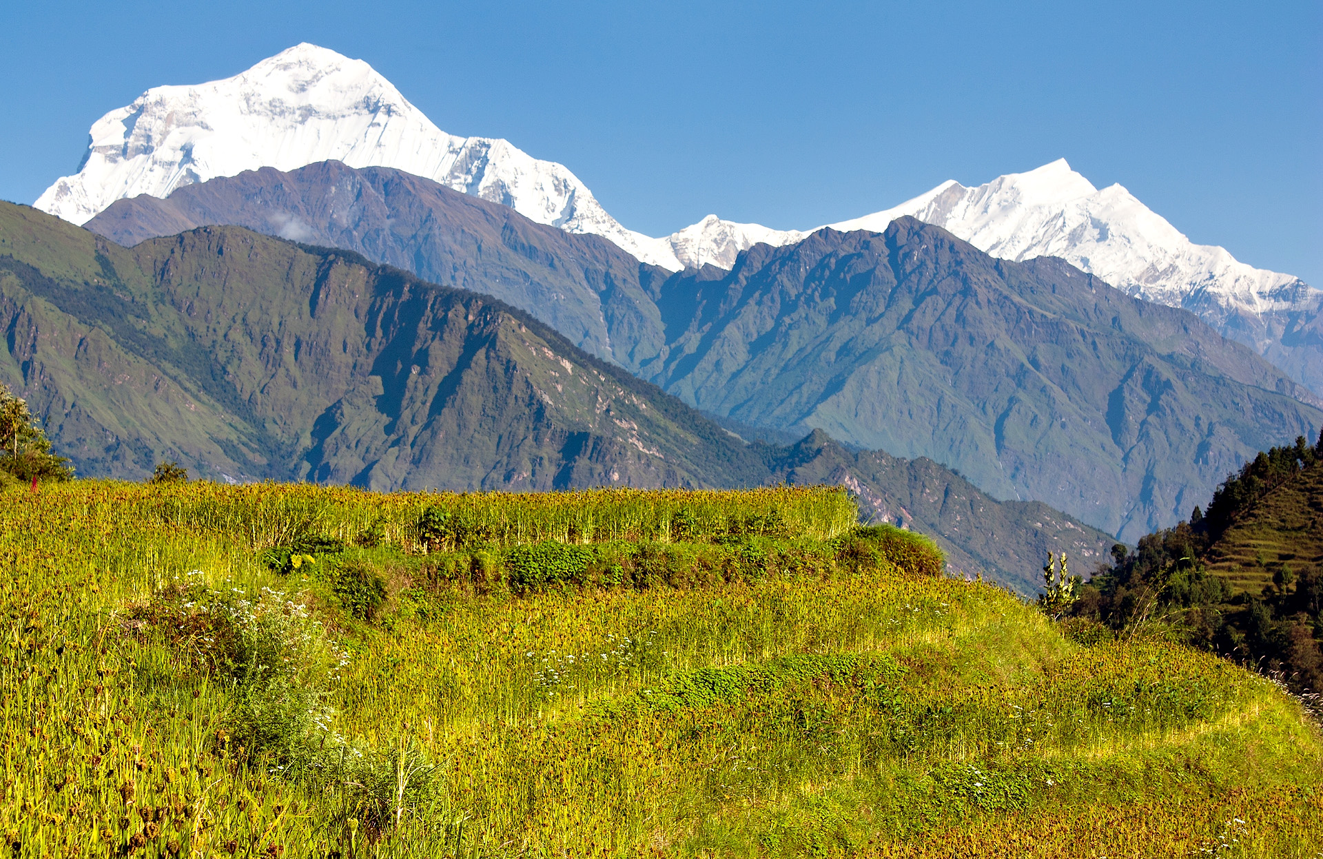 Trektocht Rond de Dhaulagiri Nepal | Snow Leopard (111)