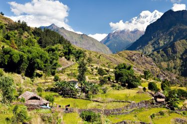 Trektocht Rond de Dhaulagiri Nepal | Snow Leopard (411)