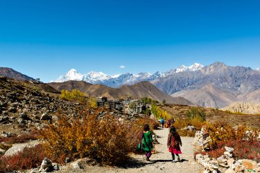 Trektocht Rond de Dhaulagiri Nepal | Snow Leopard (81)