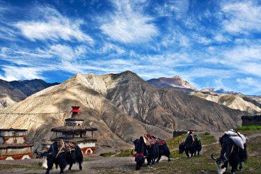 Trektocht Dolpo Lower Upper Inner Phoksumdo Nepal | Snow Leopard (20)