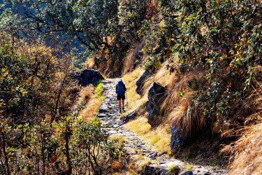 Trektocht Zuid Noord Kangchenjunga Nepal Kanchenjunga | Snow Leopard (8)
