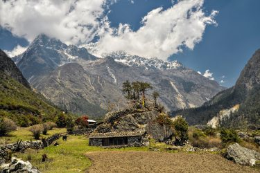 Trektocht Zuid Noord Kangchenjunga Nepal Kanchenjunga | Snow Leopard (9)