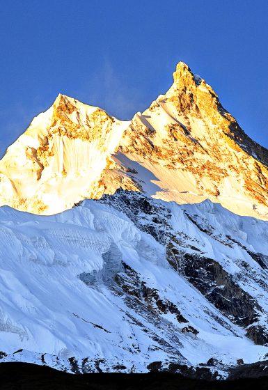 Trektocht Rond de Manaslu Nepal | Snow Leopard (18)