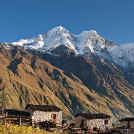 Trektocht Rond de Manaslu Nepal | Snow Leopard (3)