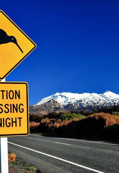 Nieuw-Zeeland Individuele Autorondreis of groepsrondreis Aotearoa | Snow Leopard (14)