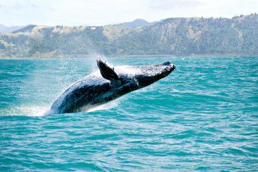 Nieuw-Zeeland Individuele Autorondreis of groepsrondreis Aotearoa | Snow Leopard (09)