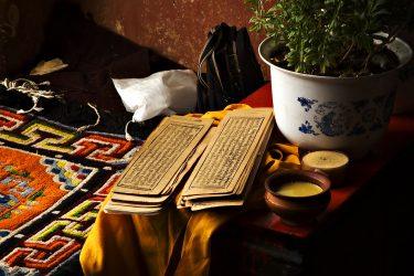 Reis Tibet Lhasa Potala Shigatse Gyantse Everest cultuur trektocht   Snow Leopard (1)