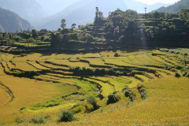 Trektocht Rond de Dhaulagiri Nepal | Snow Leopard (5)