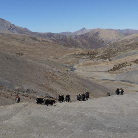 Trektocht Upper Inner Dolpo Phoksumdo Nepal | Snow Leopard (28)