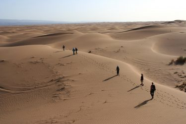Wandelreis Sahara Woestijn Marrakech Marokko | Snow Leopard (10)
