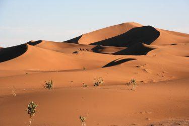 Wandelreis Sahara Woestijn Marrakech Marokko | Snow Leopard (18)