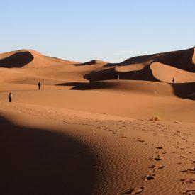 Wandelreis Sahara Woestijn Marrakech Marokko | Snow Leopard (20)