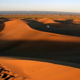 Wandelreis Sahara Woestijn Marrakech Marokko | Snow Leopard (24)