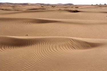 Wandelreis Sahara Woestijn Marrakech Marokko | Snow Leopard (32)