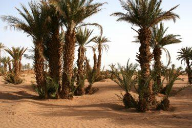 dating diensten in Palm Desert