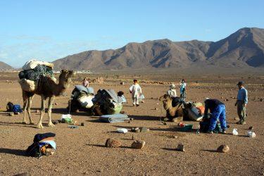 Wandelreis Sahara Woestijn Marrakech Marokko | Snow Leopard (44)