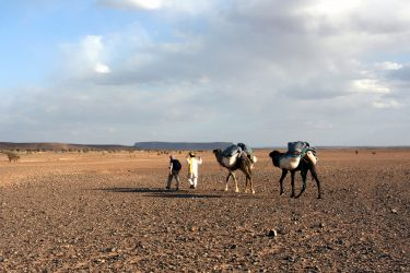 Wandelreis Sahara Woestijn Marrakech Marokko | Snow Leopard (45)