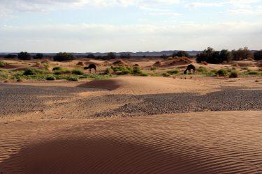 Wandelreis Sahara Woestijn Marrakech Marokko | Snow Leopard (48)