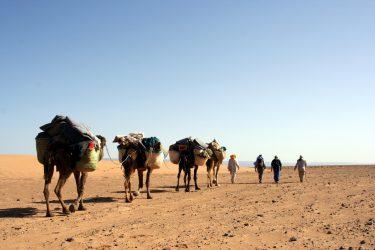 Wandelreis Sahara Woestijn Marrakech Marokko | Snow Leopard (05)