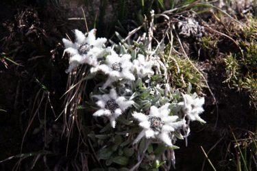 Trektocht Snowman Bhutan Himalaya | Snow Leopard (116)