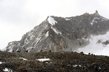 Trektocht Snowman Bhutan Himalaya | Snow Leopard (118)