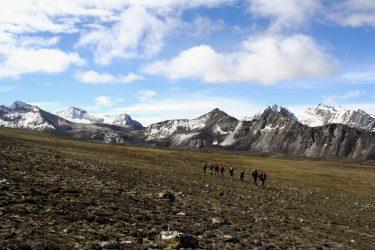 Trektocht Snowman Bhutan Himalaya | Snow Leopard (137)