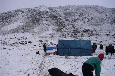 Trektocht Snowman Bhutan Himalaya 37 | Snow Leopard