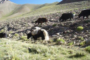 Trektocht Zanskar The Hard Way Ladakh Leh India | Snow Leopard 30
