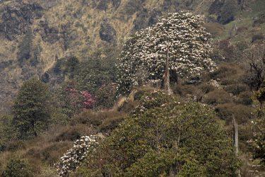 Trektocht Lamjung Himal Basiskamp Nepal | Snow Leopard - husslage 2009 (161) bos