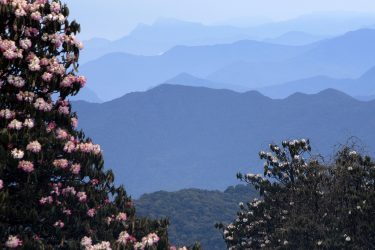Trektocht Lamjung Himal Basiskamp Nepal | Snow Leopard - husslage 2009 (210) flora rhododendron