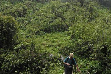 Trektocht Lamjung Himal Basiskamp Nepal | Snow Leopard - husslage 2009 (232) bos
