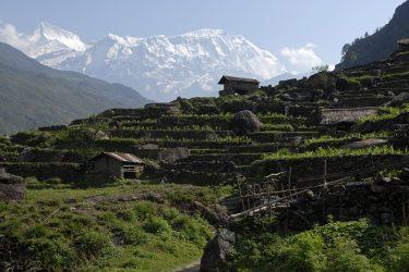 Trektocht Lamjung Himal Basiskamp Nepal | Snow Leopard - husslage 2009 (257)