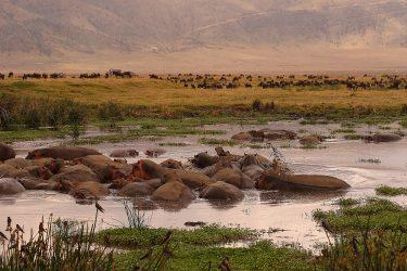 Safari Ngorongoro Serengeti Lake Manyara Tanzania | Snow Leopard (45)
