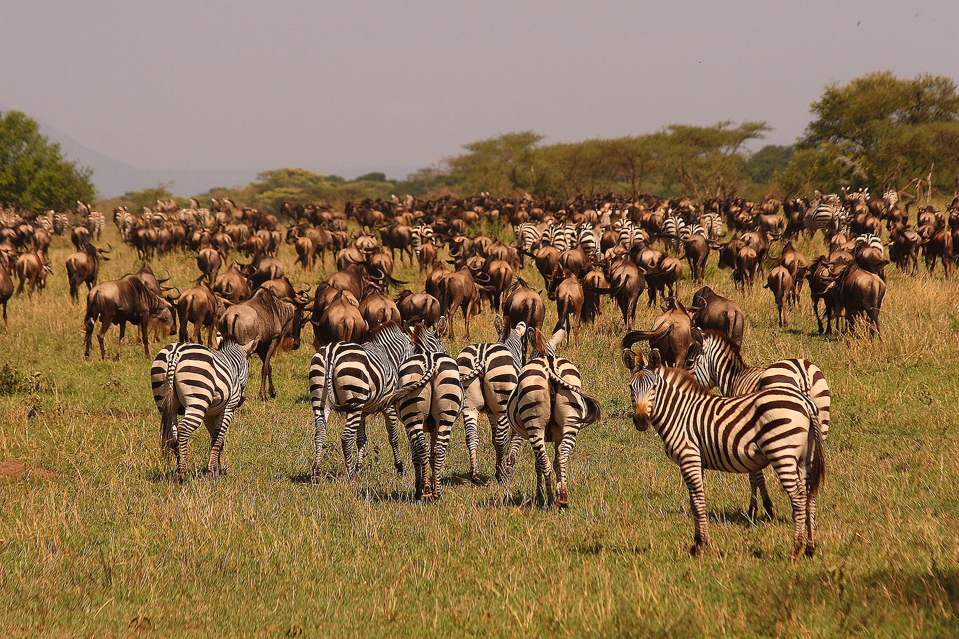 97e52f0c32f0ab Safari Ngorongoro