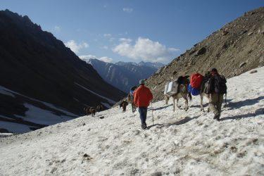 Trektocht Kinnaur Spiti Zanskar Rupshu Leh Ladakh India   Snow Leopard 03