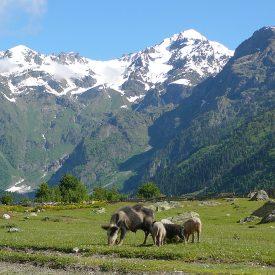 Wandelreis Georgië De Kaukasus | Snow Leopard (2)